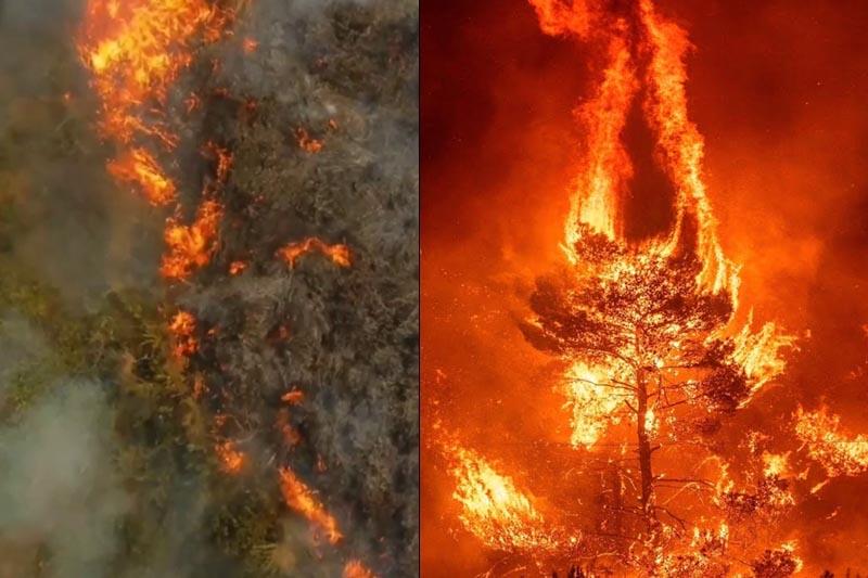 Amazon rainforest wildfires blankets Sao Paolo
