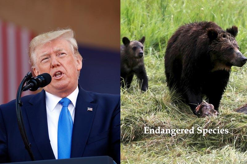 Wildlife species at risk as Trump weakens US Endangered Species Act